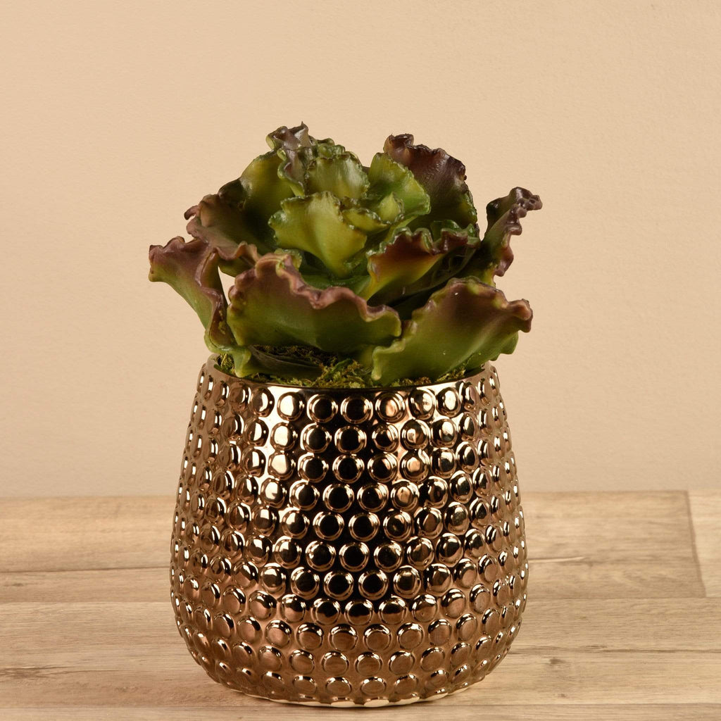 Potted Succulent - Bloomr