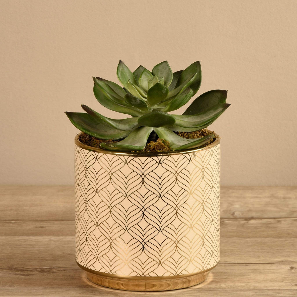 Artificial Potted Succulent - Bloomr
