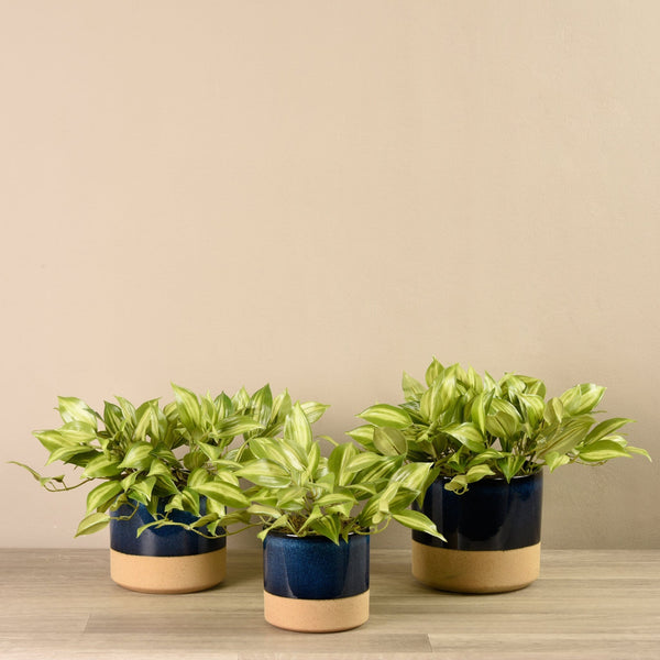 Potted Vanilla Plant Bloomr Artificial Flowers & Artificial Trees