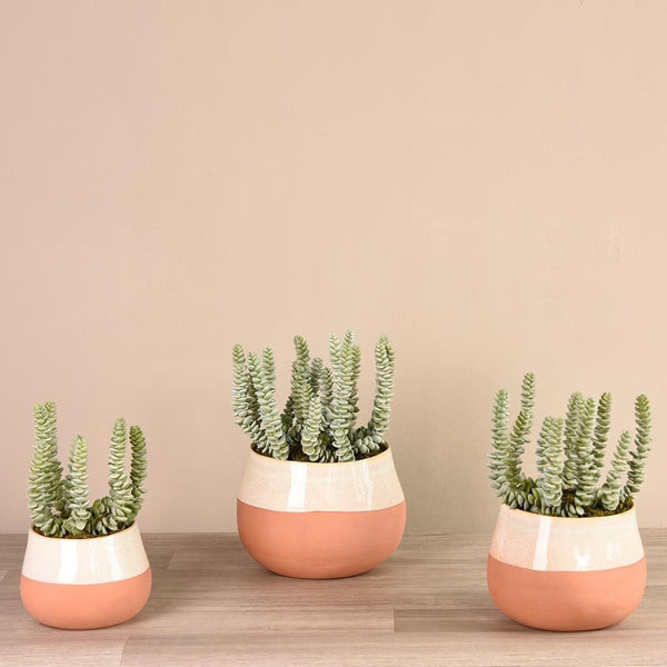 Santa Fe Succulent Arrangement Bloomr Artificial Flowers & Artificial Trees