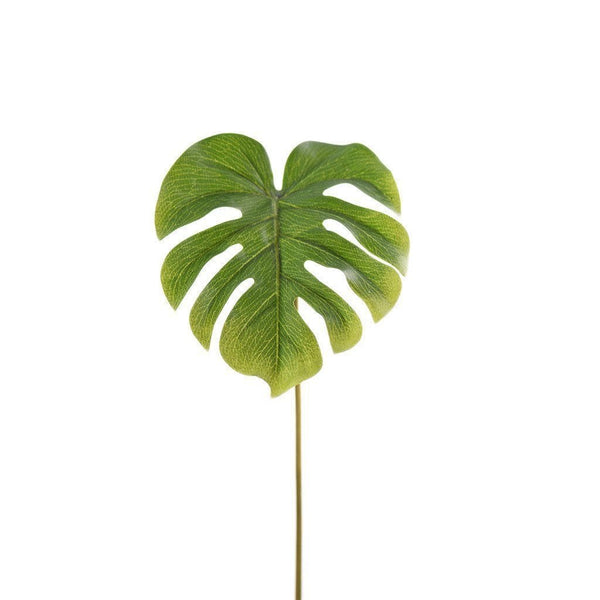 green split Philodendron leaf