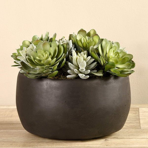 Succulent Arrangement in Bowl