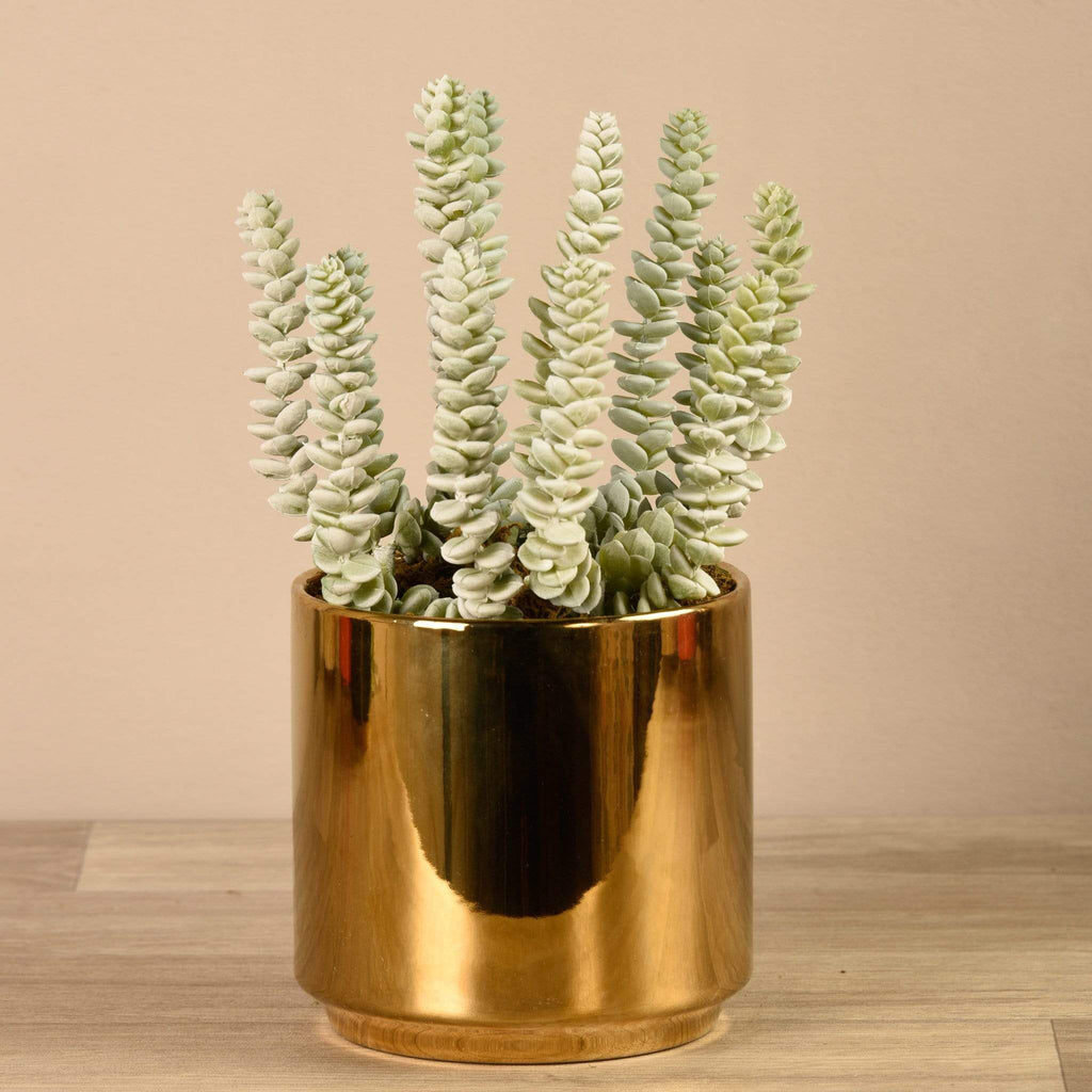 Succulent in Gold Pot Bloomr Artificial Flowers & Artificial Trees