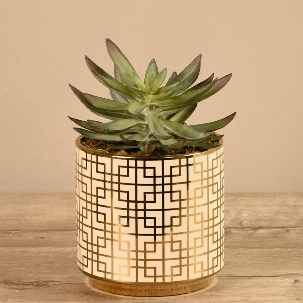 Succulent In White/Gold Pot Bloomr Artificial Flowers & Artificial Trees