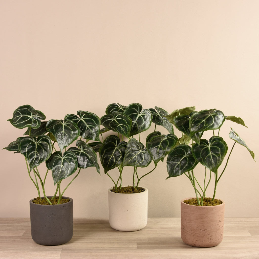Artificial Anthurium Plant in Cement Pot - Bloomr
