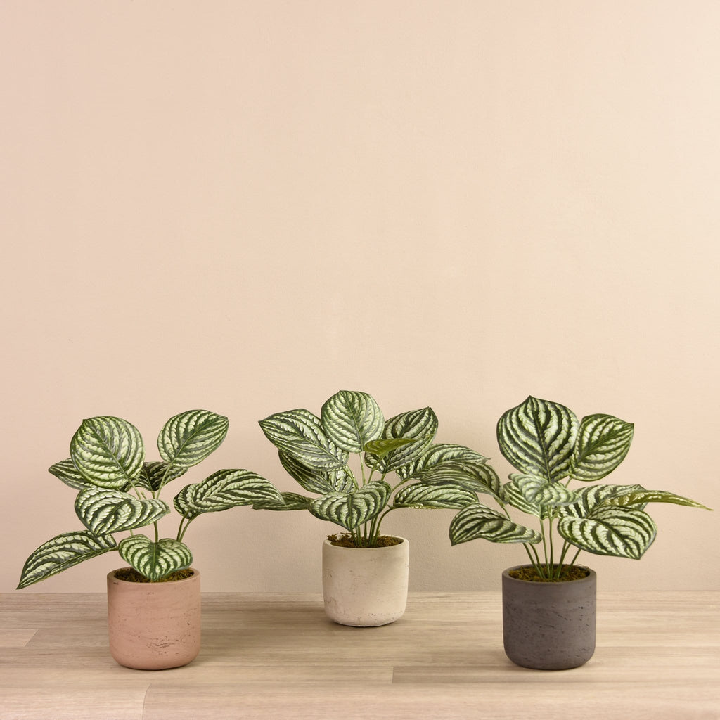 Preperomia Plant in Cement Pot Bloomr Artificial Flowers & Artificial Trees