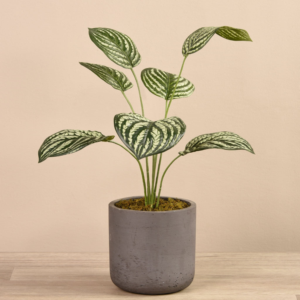 Artificial Peperomia in Concrete Pot Bloomr Artificial Flowers & Artificial Trees