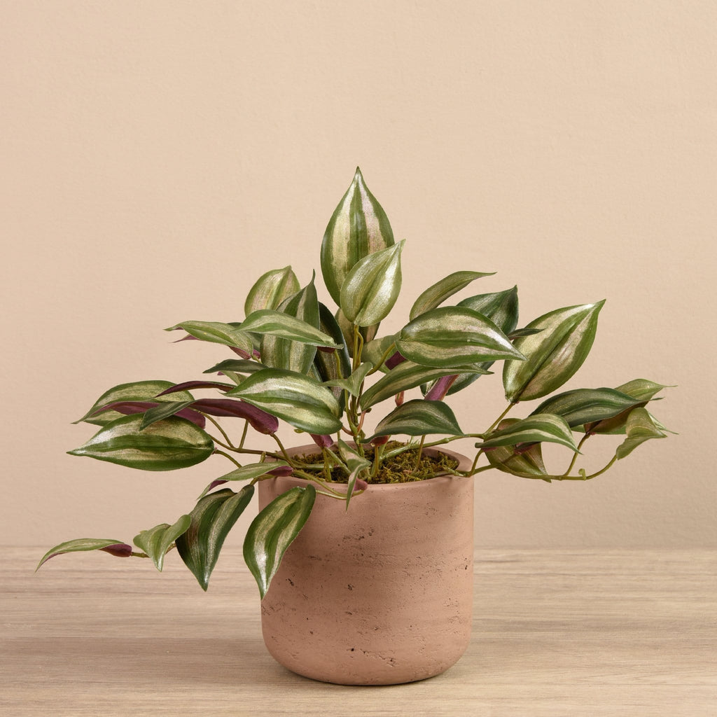 Artificial Vanilla Leaf in Cement Pot Bloomr Artificial Flowers & Artificial Trees