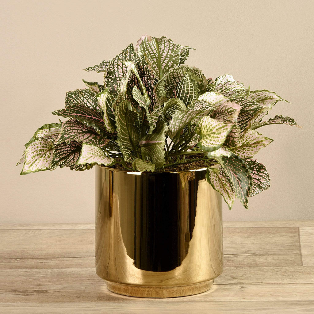 Potted Fittonia Bloomr Artificial Flowers & Artificial Trees