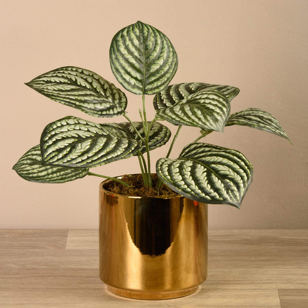 Artificial Peperomia in Gold Pot Bloomr Artificial Flowers & Artificial Trees