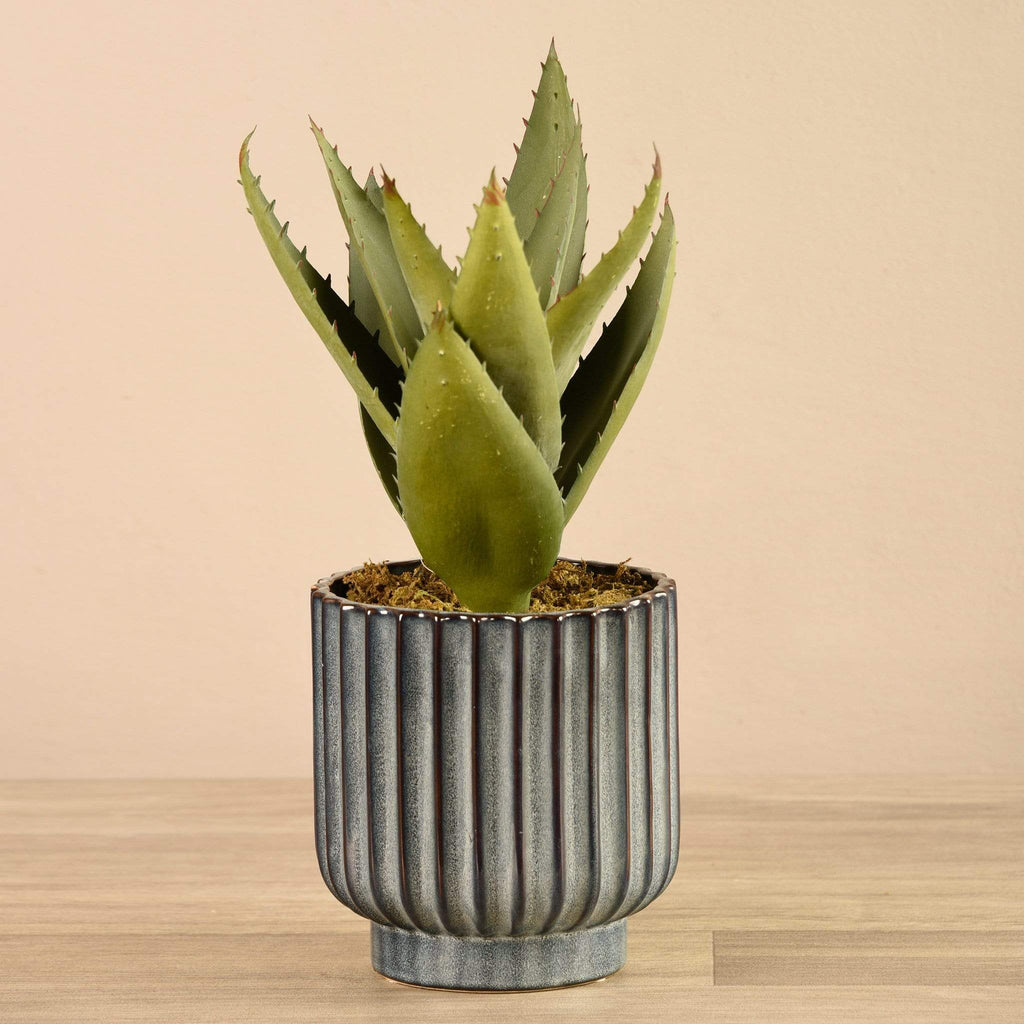 Potted Aloe - Bloomr