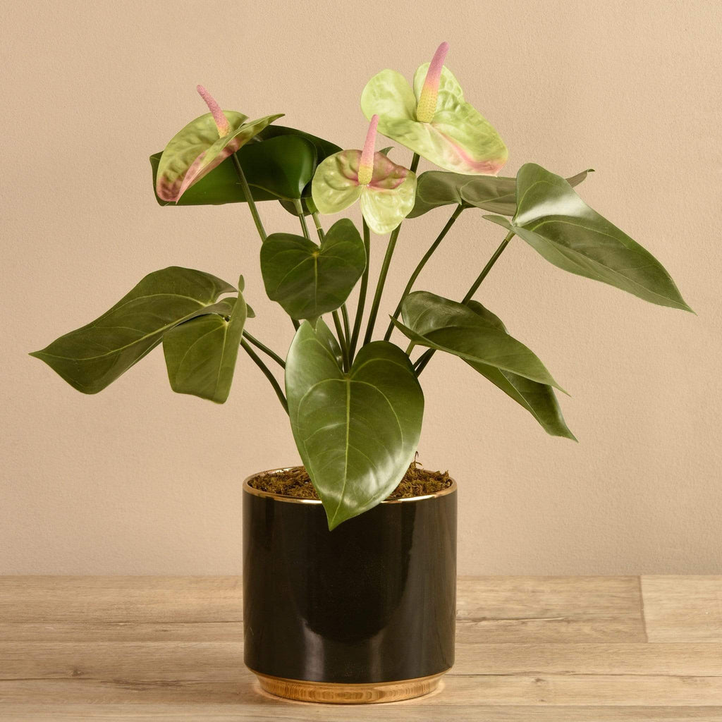 Potted Anthurium Bloomr Artificial Flowers & Artificial Trees