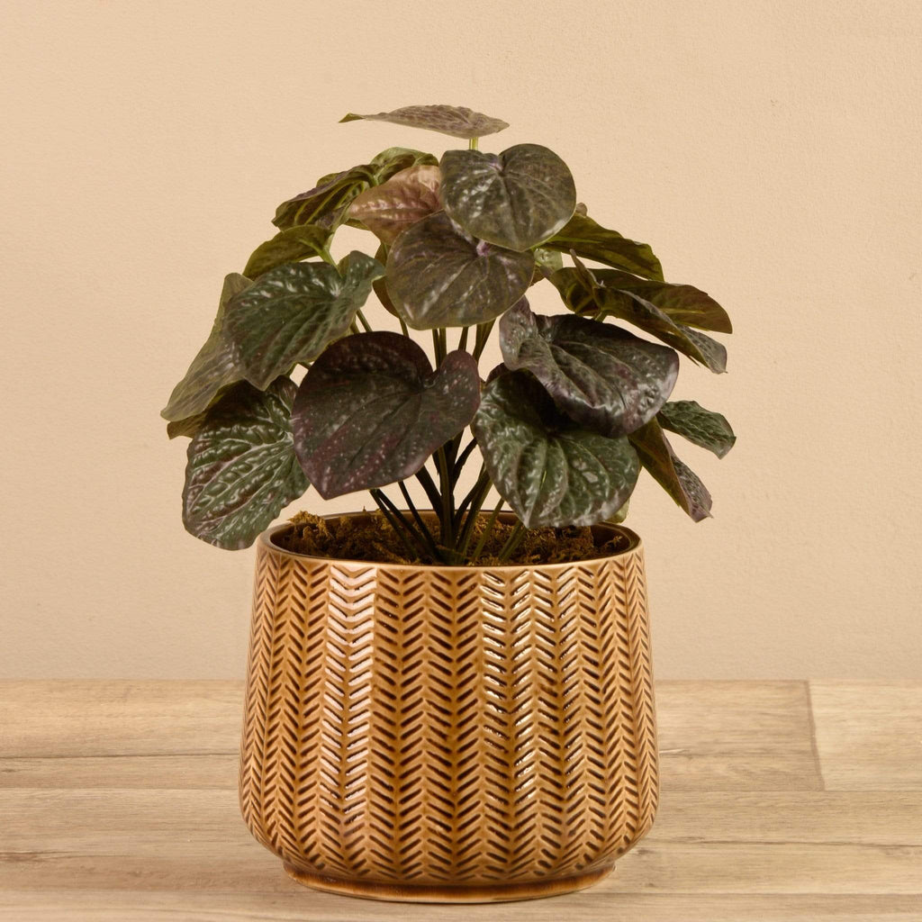 Potted Dark Peperomia - Bloomr