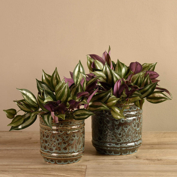 Artificial Potted Dark Vanilla Leaf Bloomr Artificial Flowers & Artificial Trees