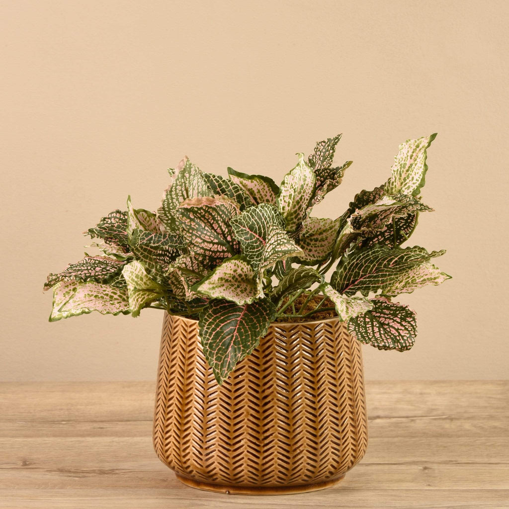 Artificial Potted Fittonia Bloomr Artificial Flowers & Artificial Trees