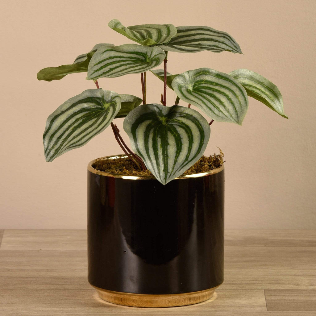 Artificial Potted Peperomia Bloomr Artificial Flowers & Artificial Trees
