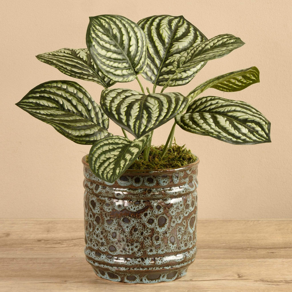 Potted Peperomia Bloomr Artificial Flowers & Artificial Trees