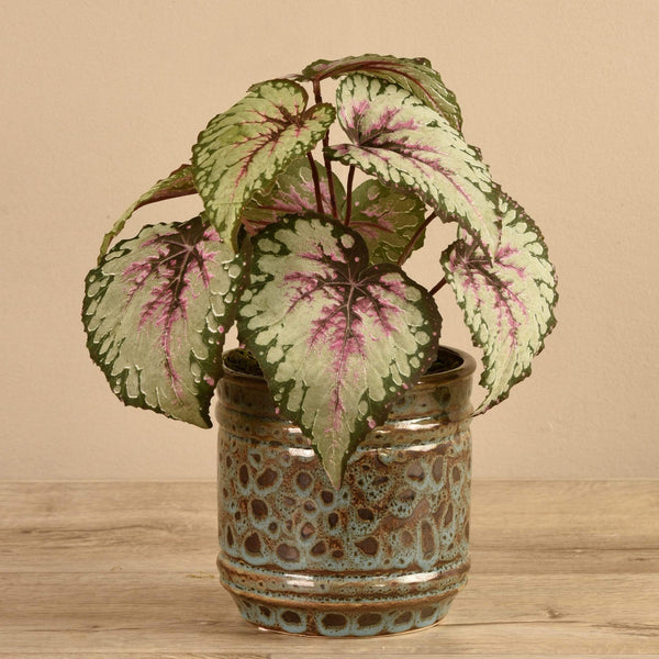 Potted Red Begonia