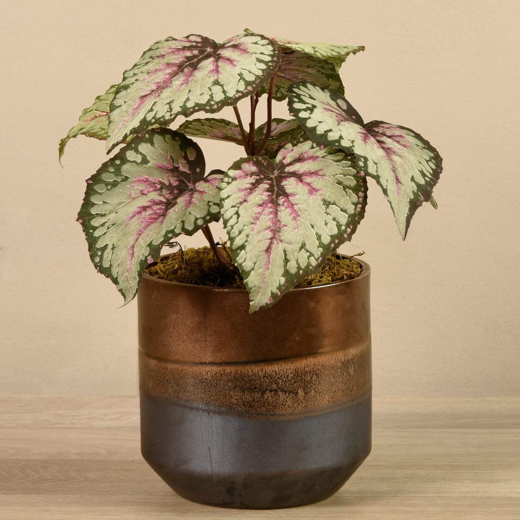Artificial Potted Rex Begonia - Bloomr