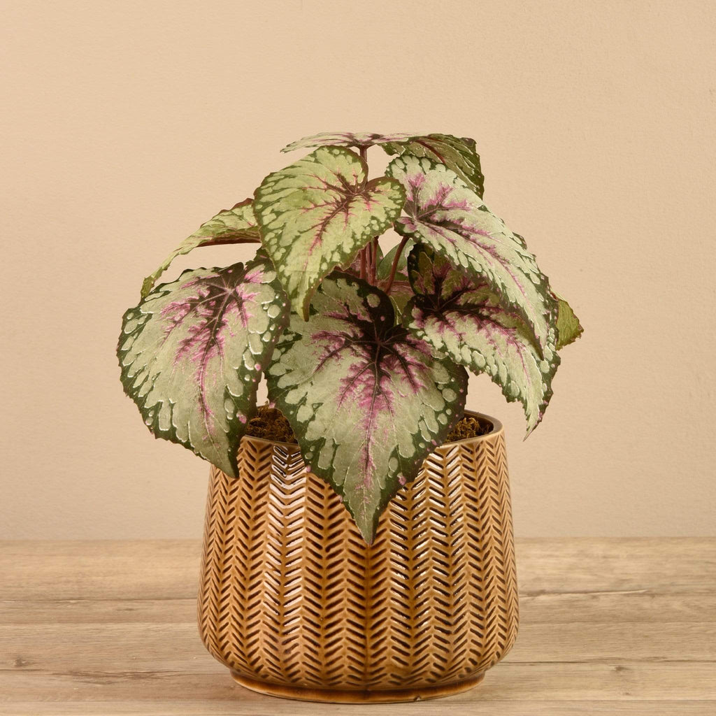 Potted Rex Begonia Bloomr Artificial Flowers & Artificial Trees