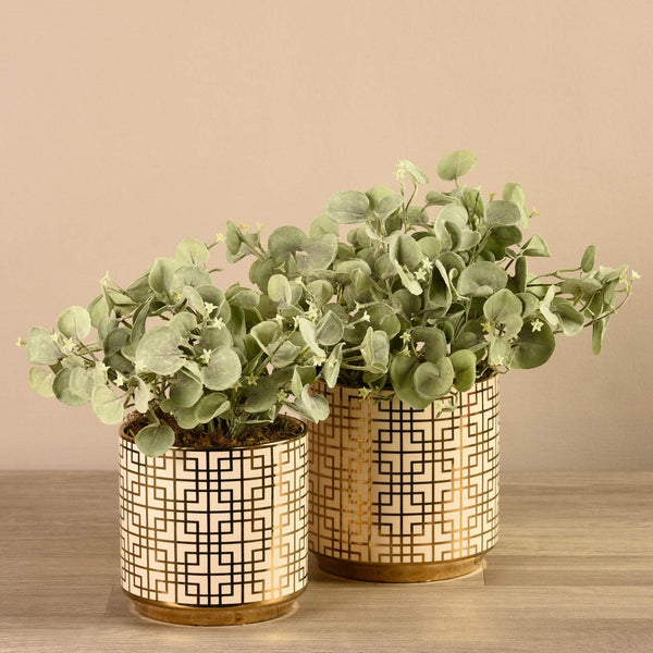 Potted Silver Fall
