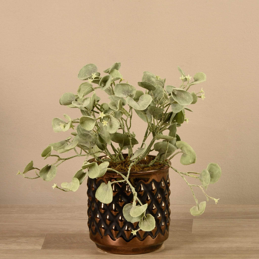 Potted Silver Fall Plant - Bloomr