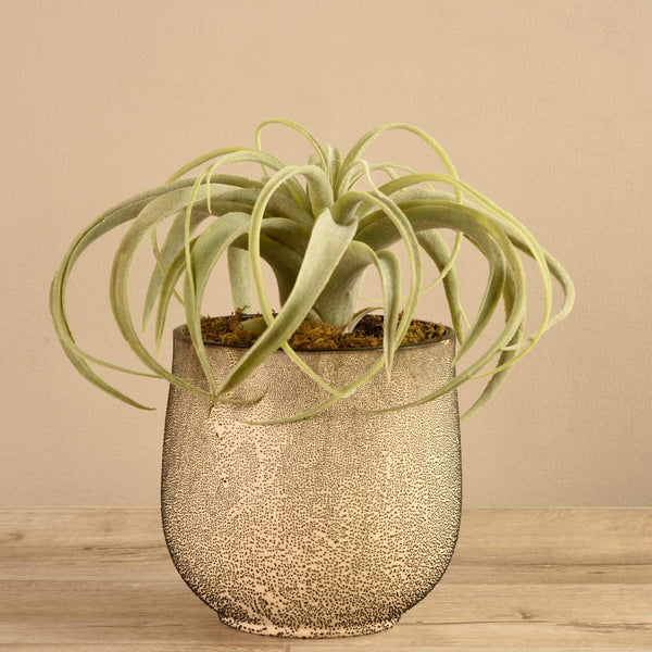 Potted Tillandsia Bloomr Artificial Flowers & Artificial Trees