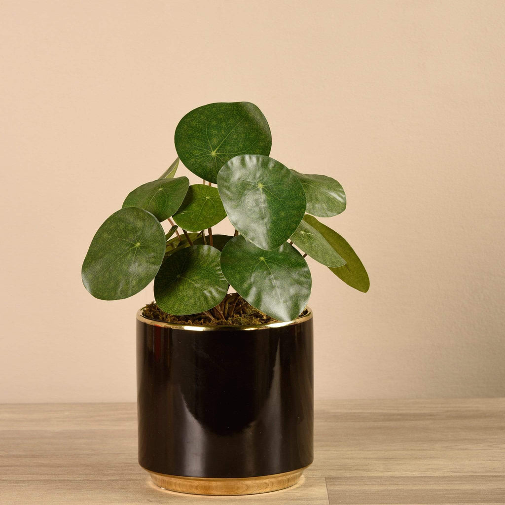 Artificial Pancake Plant in Black Pot Bloomr Artificial Flowers & Artificial Trees