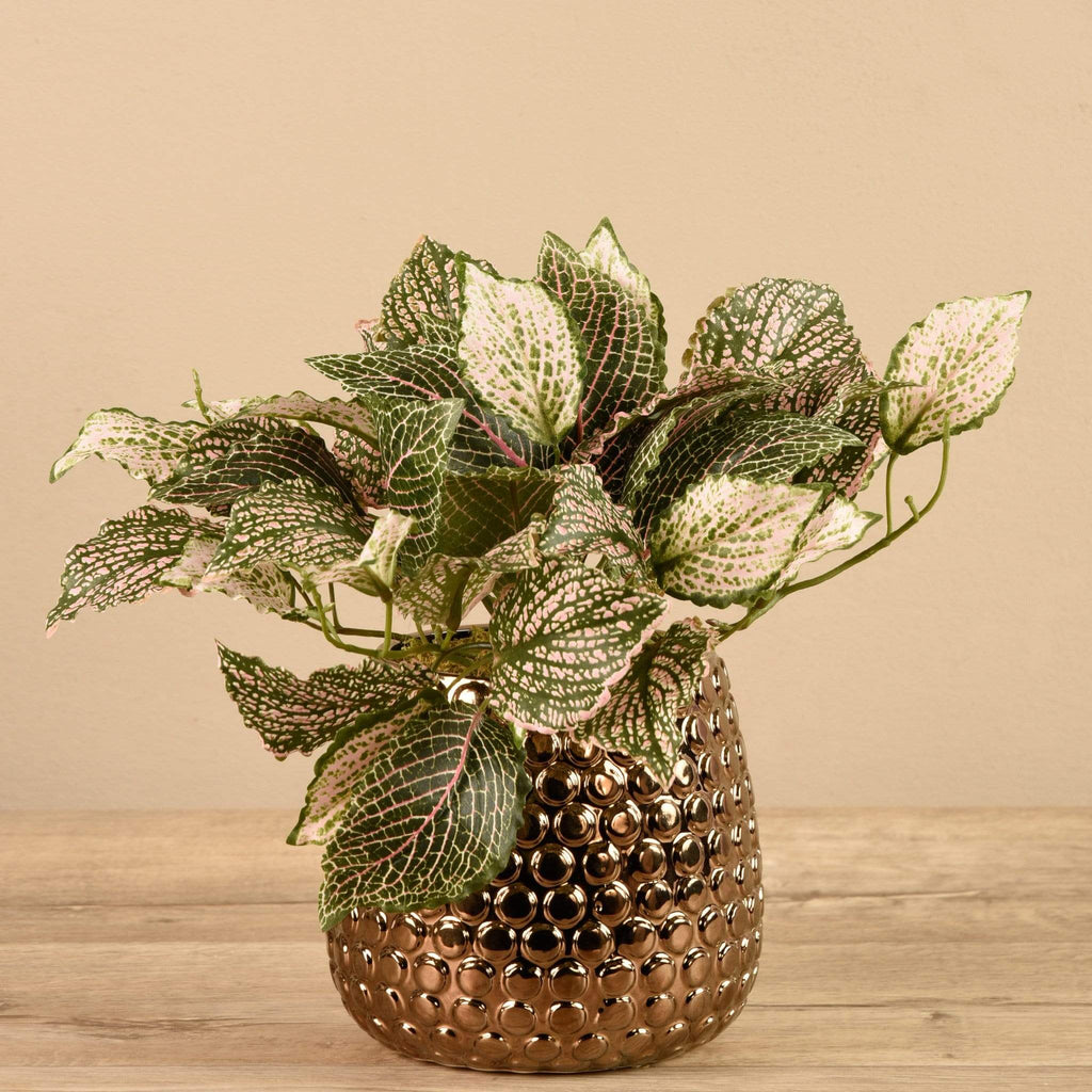 Potted Fittonia - Bloomr
