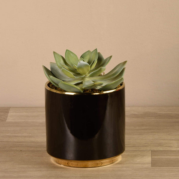 Succulent in Black Pot