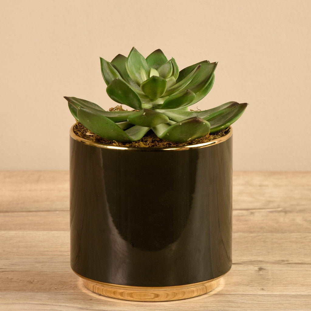 Succulent in Black Pot Bloomr Artificial Flowers & Artificial Trees