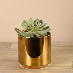 Succulent in Gold Pot