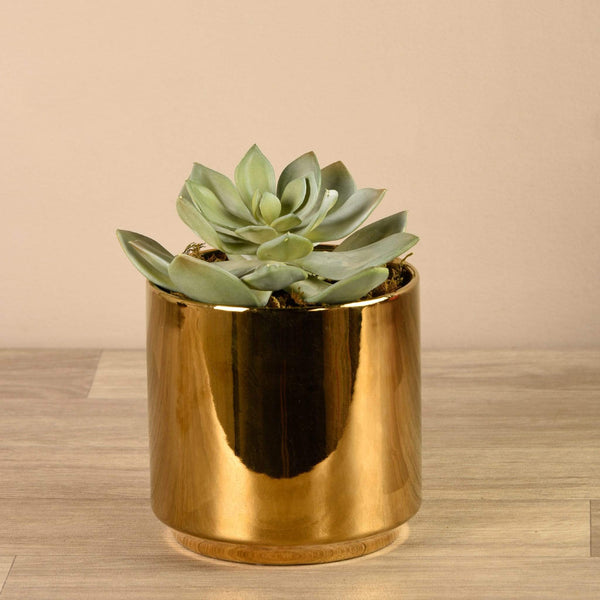 Artificial Succulent in Gold Pot Bloomr Artificial Flowers & Artificial Trees