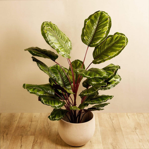 Artificial Calathea Plant - Bloomr