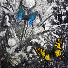 Prue MacDougall Butterfly art original art for Christmas gifts Newmarket art