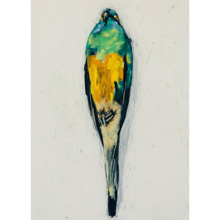 Red Rumped Parrot 1931