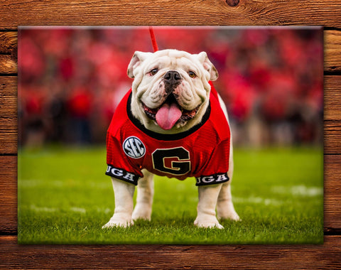 "UGA Georgia Bulldogs Fridge Magnet - Uga X Mascot 2.5""x3.5"" Premium Tin Photo Gift"