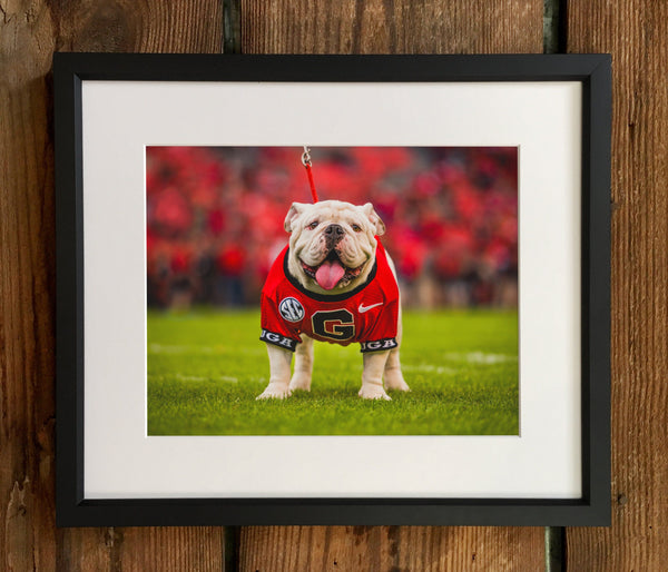 UGA: Uga X Mascot Photo Print / Fine Art Print / Canvas Wrap - Georgia Bulldogs Art