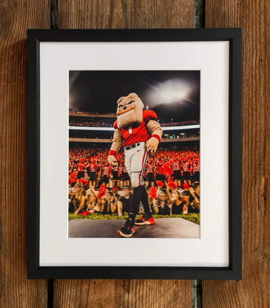 "UGA: ""Hairy Dawg Hype"" 2017 Mascot Photo Print / Canvas Wrap - Georgia Bulldogs Art"