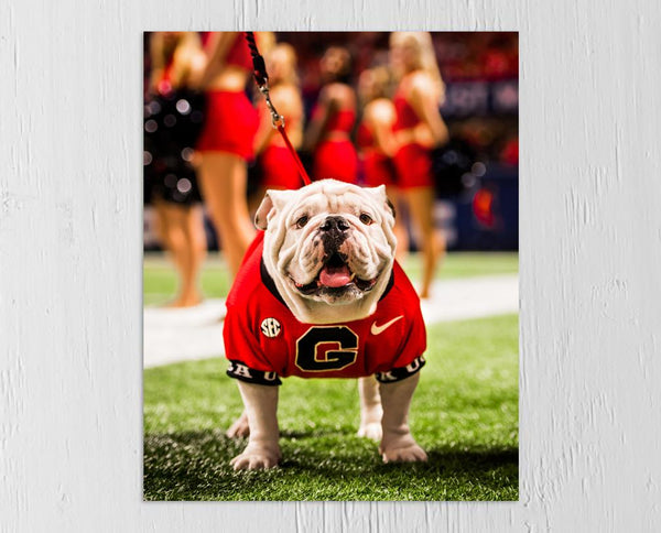 UGA: 2017 Uga X SEC Championship Mascot Photo Print / Canvas Wrap - Georgia Bulldogs Art
