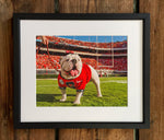 "UGA Georgia Bulldogs Art: ""Uga X in the Endzone"" Mascot Photo Print / Canvas Wrap"