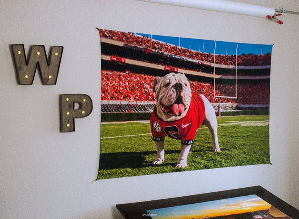 UGA Georgia Bulldogs Art: Uga X in the Endzone Mascot Tapestry Photo Print - 2XL & 3XL Sizes