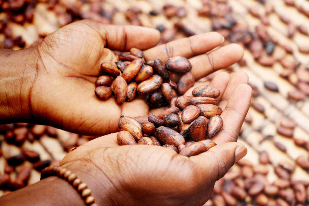 Facts About Cacao Flavanols You Should Know and Its Health Benefits