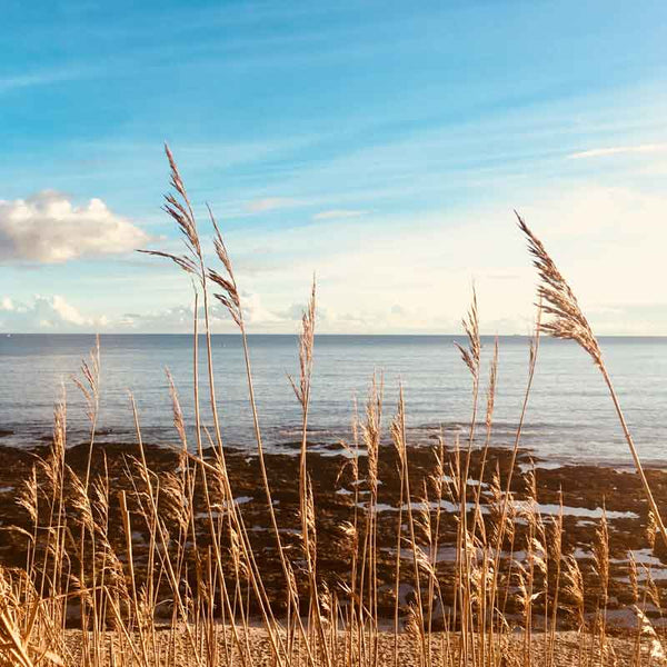 Bookshell Bindery is back open for 2020. This photo shows the beautiful horizon of grasses, sea and sky at Castle Beach in Falmouth, Cornwall, England, United Kingdom.