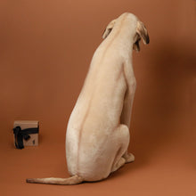 Load image into Gallery viewer, Life-Size Great Dane - Stuffed Animals - pucciManuli