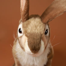 Load image into Gallery viewer, Life-Size Jack Rabbit - Stuffed Animals - pucciManuli