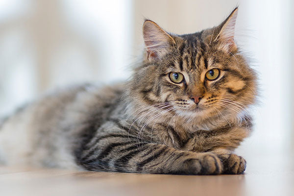 Playtime: 7 Fun Games to Play with Your Cat