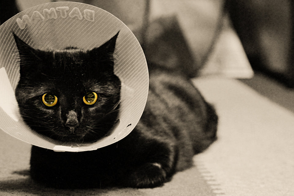 Health Benefits of Spaying and Neutering Your Cats