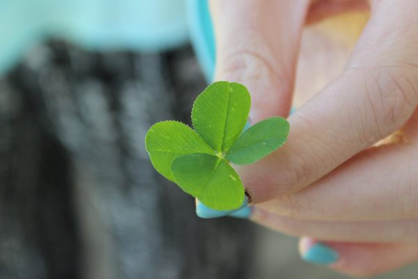 Lucky 4 leaf clover - good luck symbol