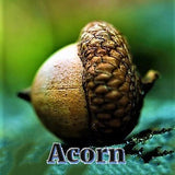 Acorn - Good Luck Symbol - Sterling Luck